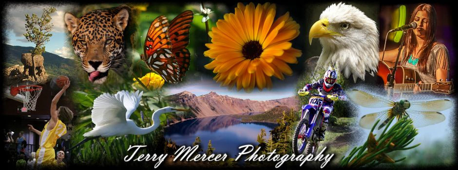 Terry Mercer Photography